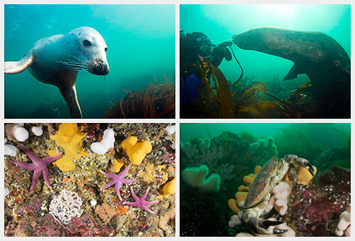 Diving the Farne Islands